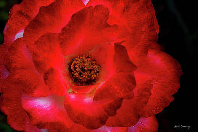 Photograph - The Very Red Rose Flower Garden Art by Reid Callaway