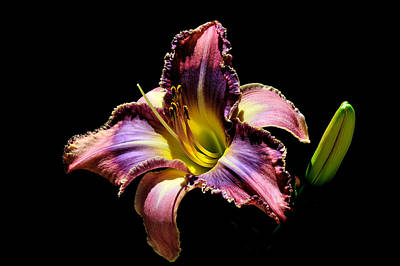 Photograph - The Vibrant Lily by Marwan Khoury