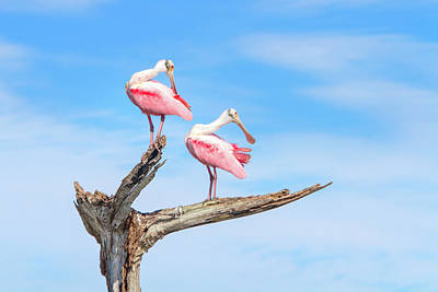 Spoonbill Photograph - The View From Above by Mark Andrew Thomas