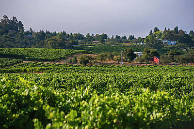 Photograph - The View From Elphick Street Sebastopol Ca by Toby McGuire