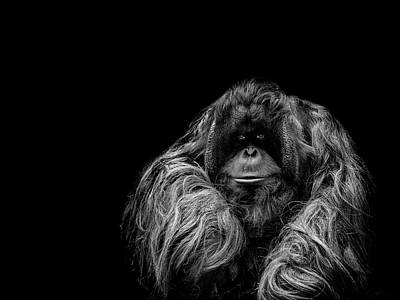 Orangutan Photograph - The Vigilante by Paul Neville