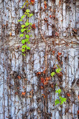 Photograph - The Vine by Glenn McCarthy