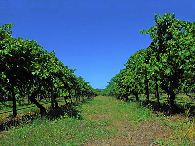 Photograph - The Vines by Mark Blauhoefer