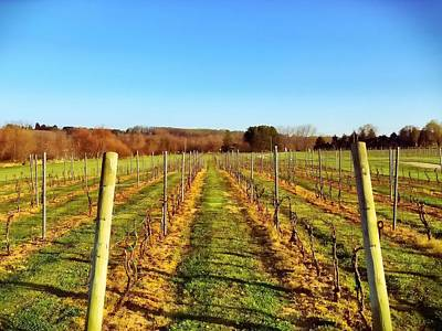 Photograph - The Vineyard by Chris Montcalmo