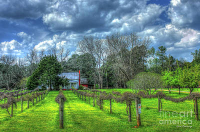 Grape Vine Photograph - The Vineyard House Landscape Photography Art by Reid Callaway