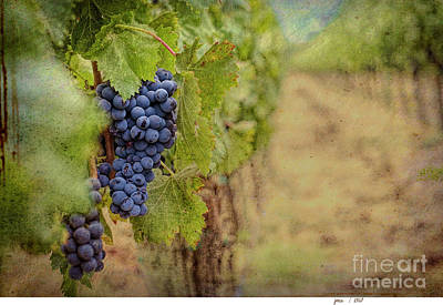 Digital Art - The Vineyard by Jim Hatch