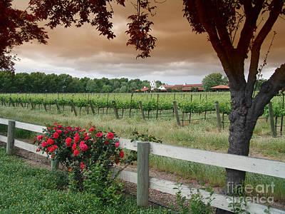 The Vineyard Original