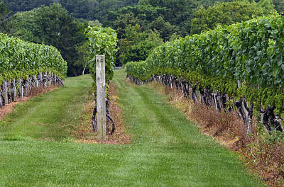 Photograph - The Vineyard by Keith Armstrong