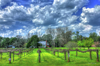 Photograph - The Vineyard Vines Landscape Photography Art by Reid Callaway