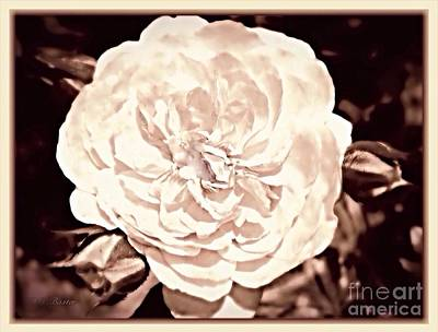 Photograph - The Vintage English Rose by Kimberlee Baxter