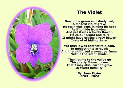The Violet Classical Wildflower Nature Poetry By Jane Taylor Art Print by Maxwell