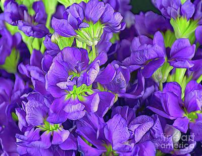 Photograph - The Virginia Stock Flower 122717-1 by Ray Shrewsberry