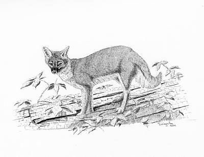 Drawing - The Vixen by Timothy Livingston