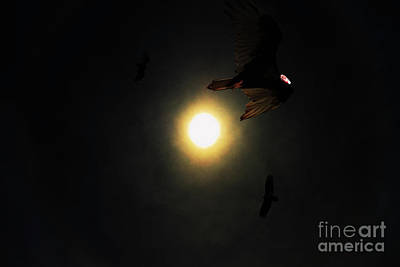 Vulture Mixed Media - The Vultures Have Gathered In My Dreams by Wingsdomain Art and Photography