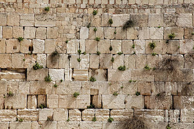 Photograph - The Wailing Wall With Vegetation by Yoel Koskas