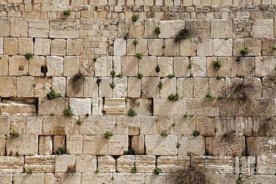 Photograph - The Wailing Wall With Vegetation by Yoel Koskas