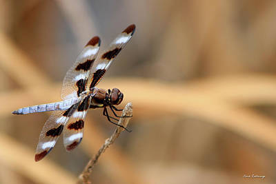 Dragonflies Mating Photograph - The Wait Brownie Dragonfly Art by Reid Callaway