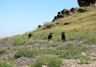 Photograph - The Wandering Dogs Of Ulaanbaatar by Diane Height
