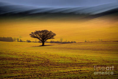 Icm Photograph - The Wanted Tree by Richard Thomas