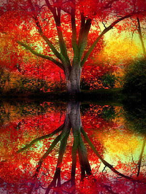 Photograph - The Warm Dreams Of Autumn by Tara Turner