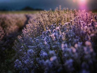 Photograph - The Warm Embrace Of The Latest Sun Rays by Plamen Petkov