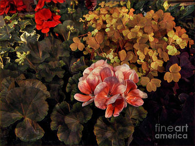 Photograph - The Warmth Of Summer - Colors In The Garden by Miriam Danar