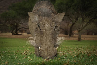 Photograph - The Warthog by Ernie Echols
