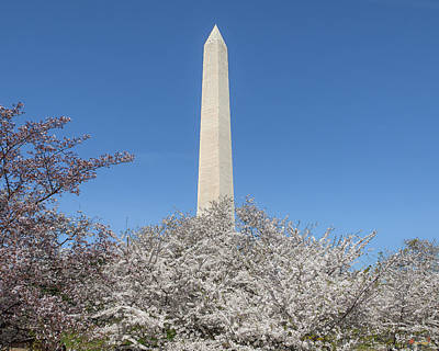 Photograph - The Washington Monument And Cherry Blossoms Ds0068 by Gerry Gantt
