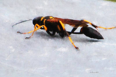 Photograph - The Wasp 2000 by Ericamaxine Price