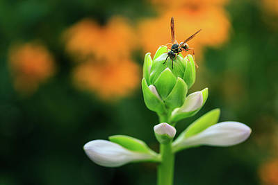 Photograph - The Wasp And The Hosta by Joni Eskridge