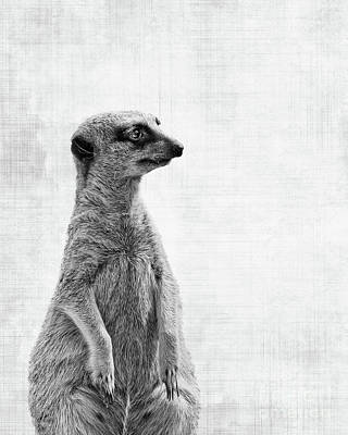 Meerkat Photograph - The Watcher by Delphimages Photo Creations