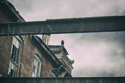 Photograph - The Watcher by Off The Beaten Path Photography - Andrew Alexander