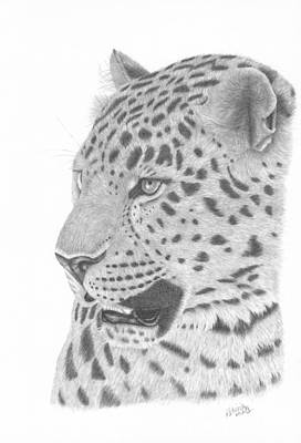 Drawing - The Watchful Leopard by Patricia Hiltz