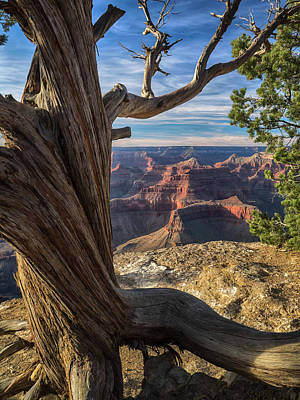 Photograph - The Watchman by Rob Wilson
