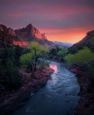 Photograph - The Watchman // Zion National Park  by Nicholas Parker