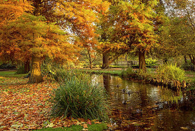Photograph - The Water Garden by Kevin Ferris