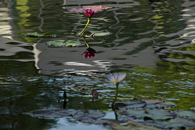 Photograph - The Water Lily 2 by Cendrine Marrouat