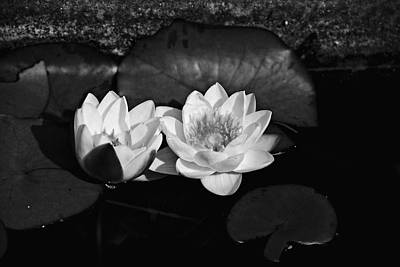 Photograph - The Water Lily 4 by Cendrine Marrouat