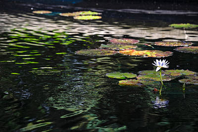 Photograph - The Water Lily by Cendrine Marrouat