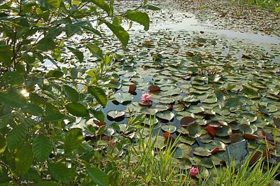 The Water Lily Pond Art Print by Molly Dean