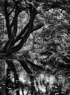 Trees And Lake Photograph - The Water Margins - Monochrome  by Philip Openshaw