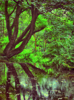 Trees And Lake Photograph - The Water Margins - Nutclough Woods by Philip Openshaw