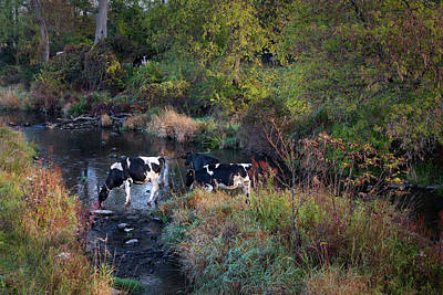 Photograph - The Watering Hole by Bill Wakeley