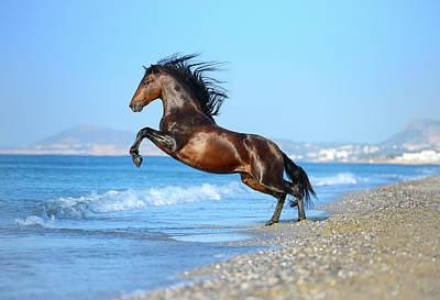 Photograph - The Wave. Andalusian Horse by Ekaterina Druz