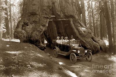 Photograph - The Wawona Tree Mariposa Grove, Yosemite  Circa 1916 by California Views Mr Pat Hathaway Archives