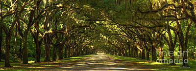 1736 Photograph - The Way Home Wormsloe Plantation Savannah Georgia Art by Reid Callaway