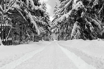 Photograph - The Way Into The Winter - Monochrome Version by Andreas Levi
