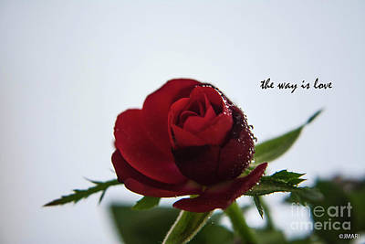 Photograph - The Way Is Love by Jacquelinemari