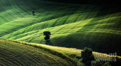 Photograph - The Way The Light Falls by Evelina Kremsdorf