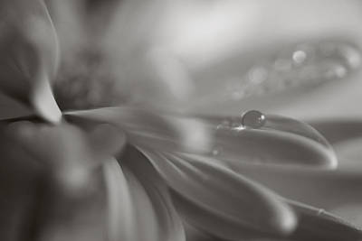 Flowers And Water Drops Wall Art - Photograph - The Way Your Eyes Sparkle by Laurie Search
